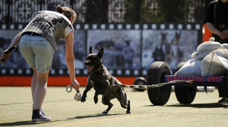 собаки для спорта