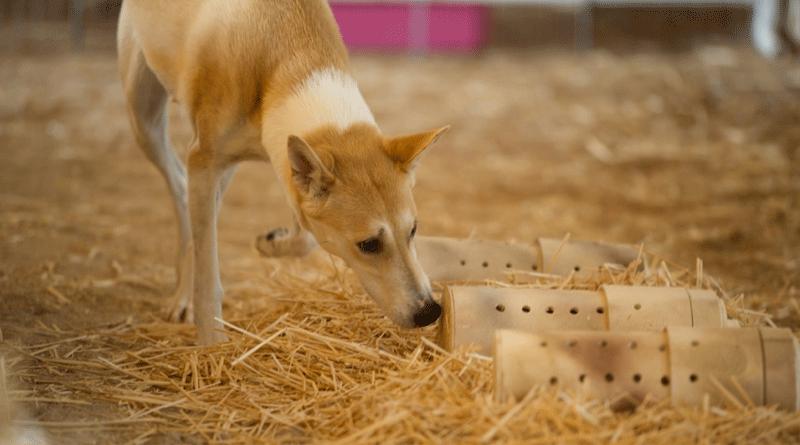 Барнхант – спорт для норных охотничьих пород