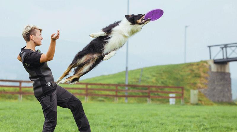 Фрисби для собак — история, виды, правила соревнований