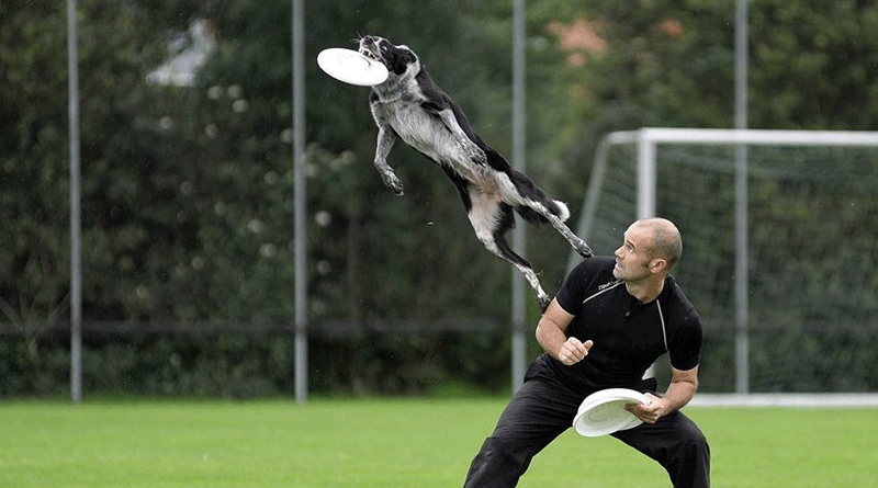 фрисби с собакой