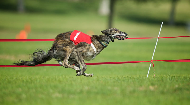 coursing_3