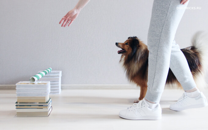 How to teach your dog to jump over a barrier