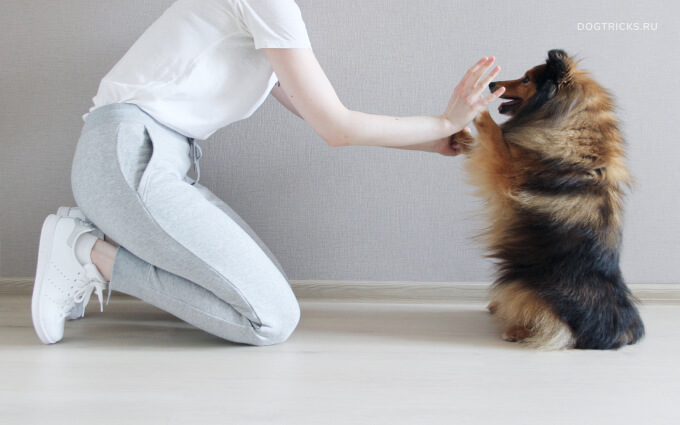 How to teach your dog the high ten trick