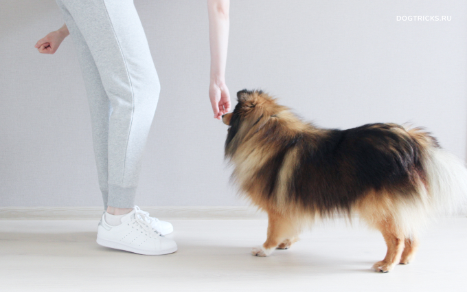 How to teach your dog to spin around you