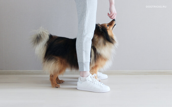 How to train your dog to walk between the legs
