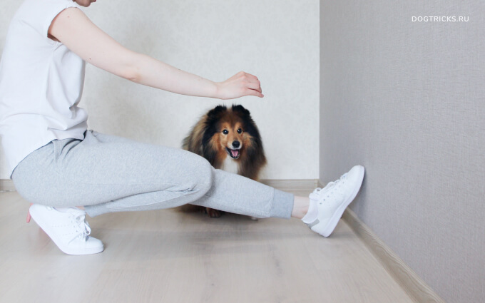 How to teach your dog to jump over the leg