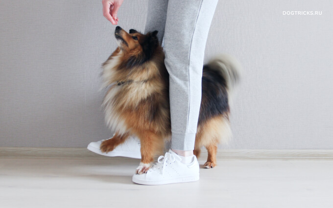 Teaching your dog the Legs trick