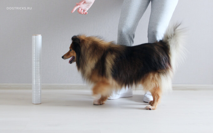 """Teaching the dog the """"Turnover"""" trick"""