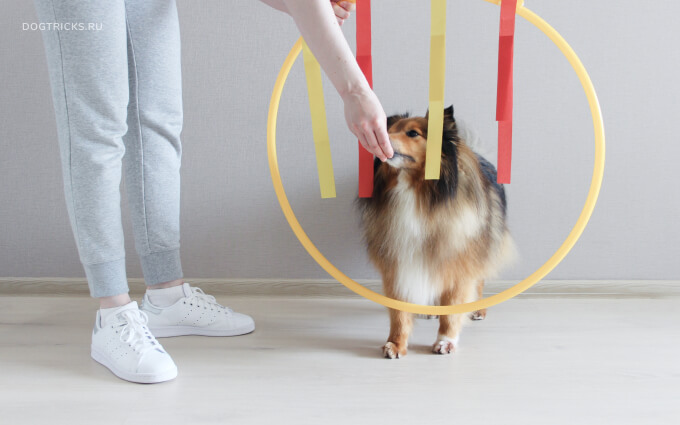 How to teach your dog the Ring of Fire trick