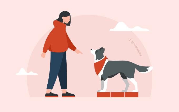 How to teach your dog parkour