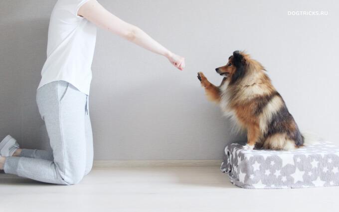 "Teaching the dog the command ""Bye-bye"""