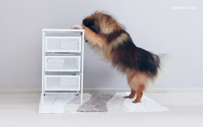 """How to teach your dog the """"hide and seek"""" trick"""