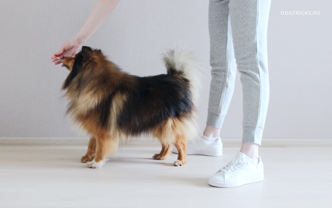 Teaching your dog to reverse