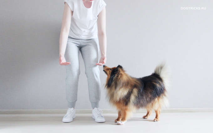 How to teach your dog to jump into your arms