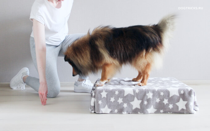 Teaching your dog to jump onto objects
