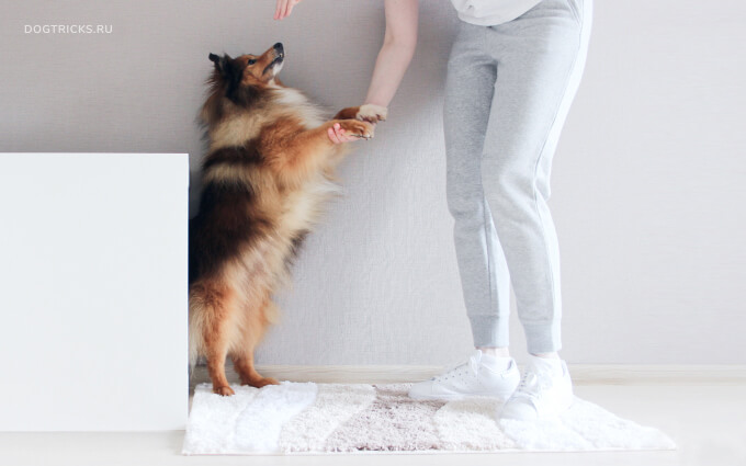 How to teach your dog to dance on its hind legs