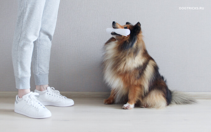 How to teach your dog to bring slippers