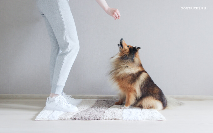 How to teach your dog to jump high up