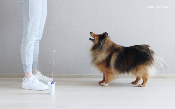 How to teach your dog to move forward