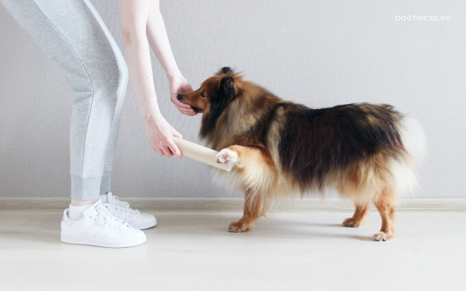 How to teach your dog to search by smell